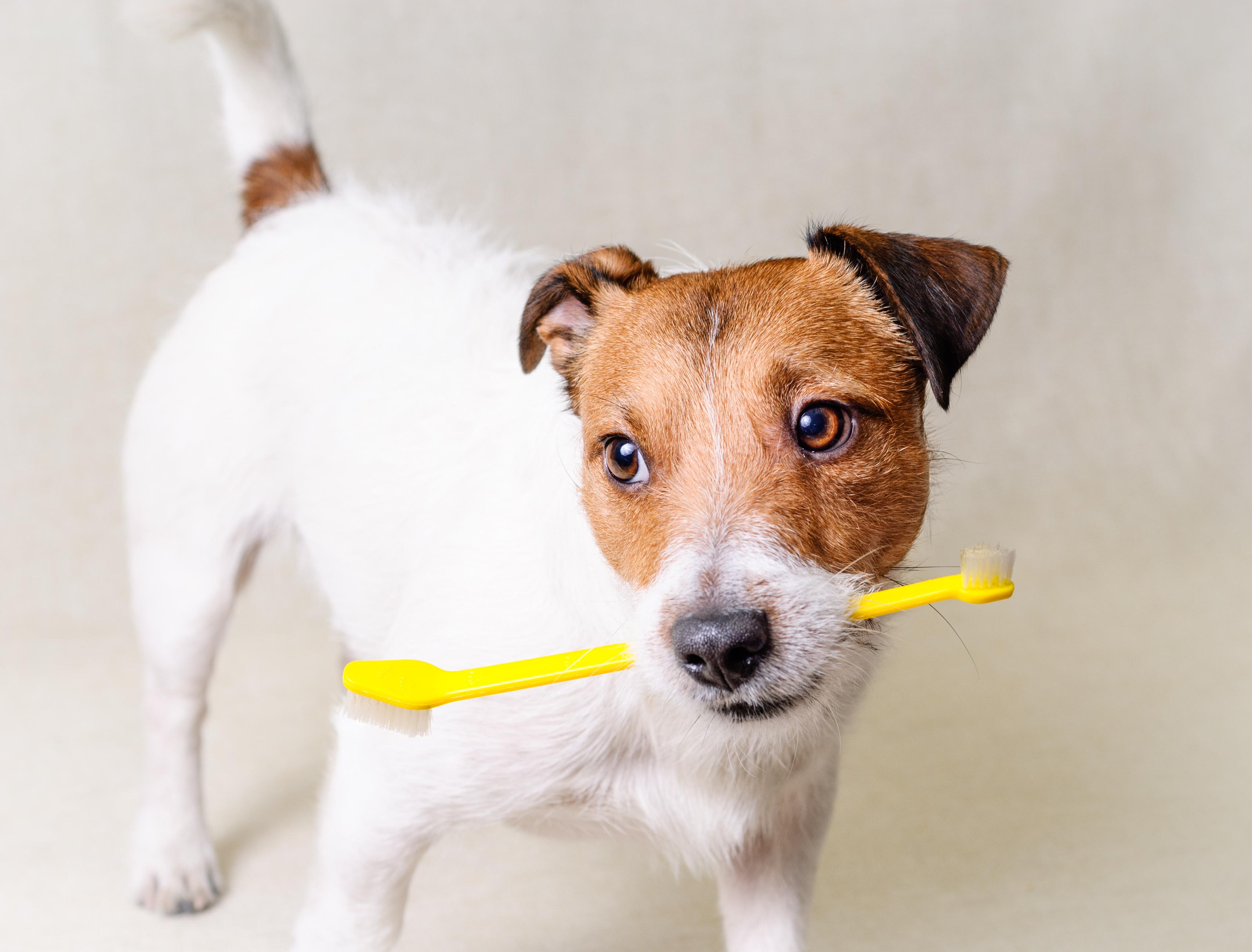 How to brush teeth dog Ultrasonic cleaning of teeth: reviews 55